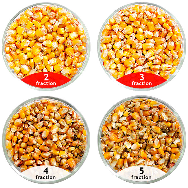 Corn seeds treated by the separator SAD treatment of maize