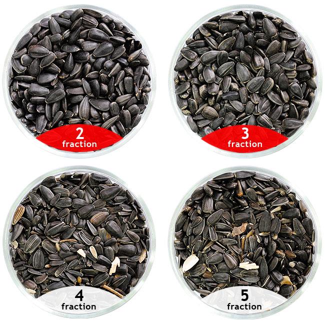 Calibrage des semailles de tournesol