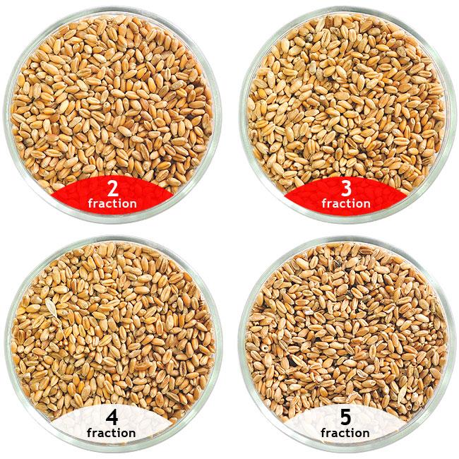 Calibrage de blé, purification de blé à l'aide des épépineuses CAD pour la purification des grains